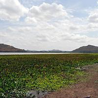 Una de las lagunas de llanos venezolanos con la planta Bora. El Hato Piñero, ubicado en los llanos centrales de Venezuela, Estado Cojedes; constituye un desarrollo que se caracteriza por el turismo ecológico, donde los visitantes pueden disfrutar de la diversidad de la fauna, las actividades ganaderas y agroindustriales. El Hato Piñero es un retiro para los amantes de la naturaleza, observadores de aves o los viajeros que simplemente buscan paz y tranquilidad. Estado Cojedes. Venezuela. One of the lagoons of Venezuelan plains with the Bora (Eichhornia) plant. El Hato Piñero, located in the central plains of Venezuela, Cojedes State; It is a development characterized by ecological tourism, where visitors can enjoy the diversity of fauna, livestock and agroindustrial activities. El Hato Piñero is a retreat for nature lovers, birdwatchers or travelers who simply seek peace and tranquility. Cojedes State. Venezuela.