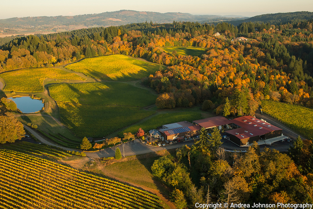 Aerial view over Elk Cove estate Vineyard, Willamette Valley, Oregon