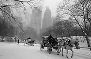 New York. horse car in Central park in winter in the snow ,  Hansom cabs, Manhattan  New York  Usa /  caleches dans Central park, en hiver dans la neige. les - Hansom cabs - carrioles à cheval  New York  USa