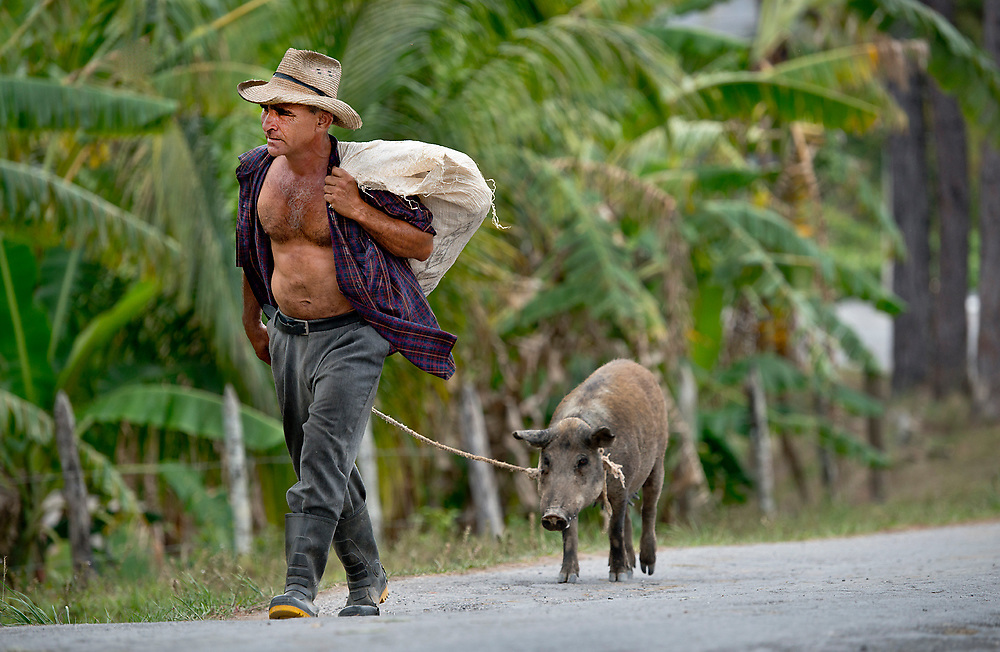 Farmer with his pig, Vanales, Cuba