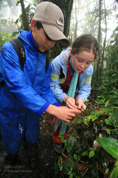 Cloud Forest School sixth graders Douglas Rodriguez Cruz and Jocelyn Mena Mora examine flower in rainforest of Santa Elena National Park, Costa Rica.