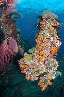 Soft Coral Encrusted Pinnacle<br /> <br /> Shot in Indonesia