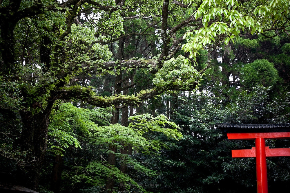 KAGOSHIMA, JAPAN, ken 2009 -  Kirishima Jingu is in the middle of a deep forest. The Torii is one of the three gates of the shrine. May 2009