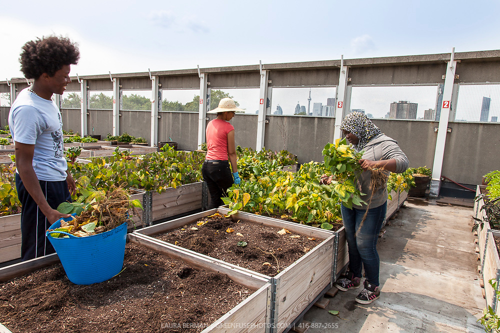 Eastdale School Grown Rooftop Garden | GreenFuse Photos: Garden, farm & food photography