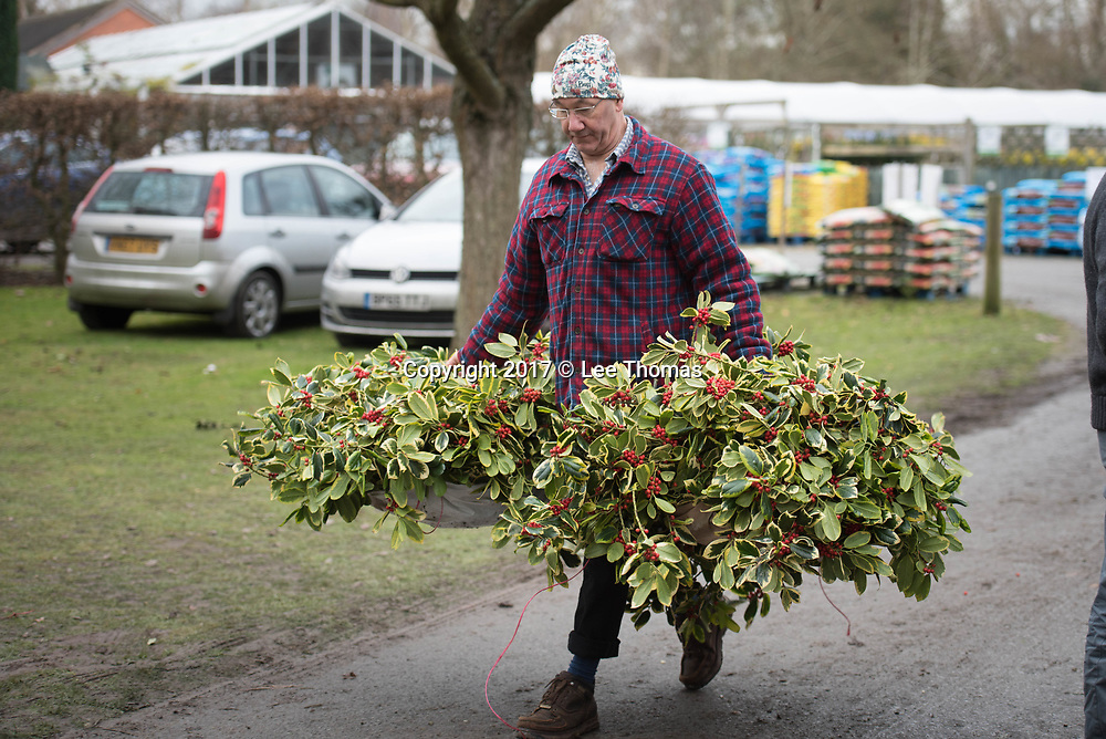Burford House Garden Stores, Tenbury Wells, Worcestershire, UK. 5th December 2017. Buyers flock to Burford House in Tenbury Wells to take part in the annual mistletoe, wreaths, holly and Christmas tree auctions. Pictured: A customer carries his holly bought at the auctions. // Lee Thomas, Tel. 07784142973. Email: leepthomas@gmail.com  www.leept.co.uk (0000635435)
