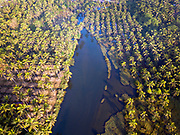 Aerial view of palm trees and backwaters in Bekal, Kerala, India.