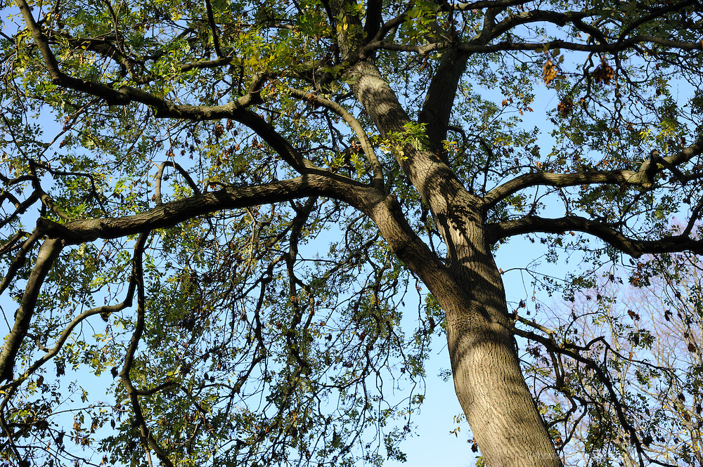 A Tree with leaves beginning to trun against a blue sky