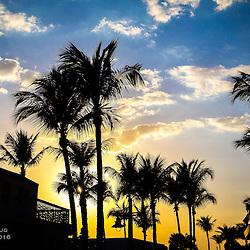 Palm trees line the skyline