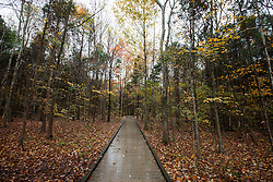 Wet boardwalk on Sand Cave Trail in late autumn, Mammoth Cave National Park, Kentucky, United States of America