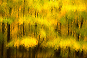 Yellow Forest #3, Watchtung Reservation, New Jersey  2006
