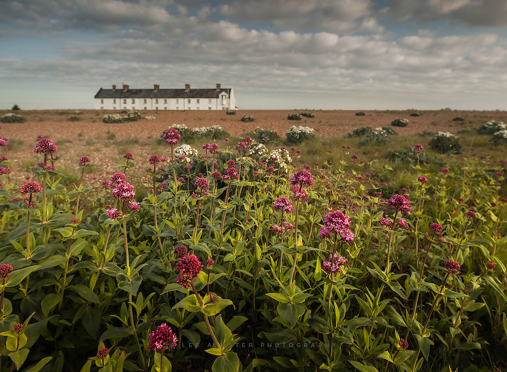 Red Valerian (I think) on the beach at Shingle Street. A bit of split toning and tidying up of the telegraph wires on this one