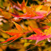 The many brightly colored leaves at once both stand out and then blend together in a collage of color.