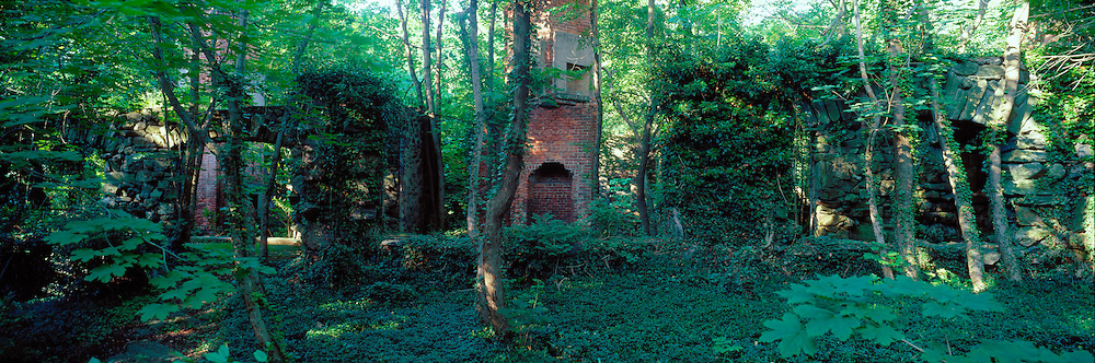 A panoramic image of a dense forest with ivy covered tree trunks and overgrown ruins