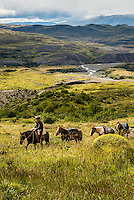 A Gaucho leads three horses loaded with supplies up a hiking trail.