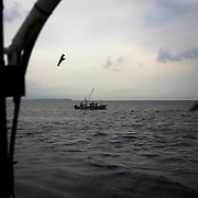 A group of fishermen from Togura, recover nets at sea near the small village of Minami Sanriku in Miyagi prefecture. Togura, a small fishing village in Minami Sanriku, was vastly destroyed by the 2011 tsunami that hit the northeast coast of Japan. Thousands died and hundreds of families lost their houses, business and boats. The recovering community works now in a cooperative system where the few remaining boats, spared by the devastating tsunami, are shared by all.