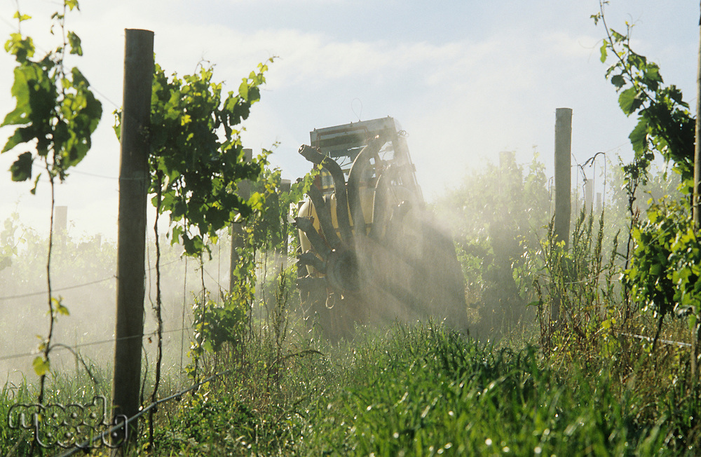 Tractor spraying vineyard with fungicide Yarra Valley Victoria Australia.