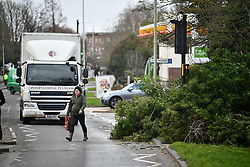 © Licensed to London News Pictures. 03/01/2018. London, UK. A tree fallen on to a pedestrian crossing at Ickenham in North West London, as storm Eleanor brings gusts of up to 100mph to the UK.. Photo credit: Ben Cawthra/LNP