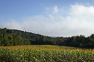 Mount Hope, New York  - Clouds move over a corn field on Sept. 21, 2013.