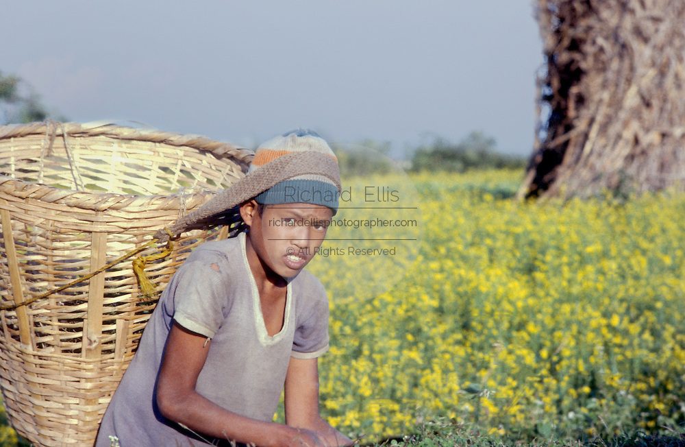 A young boy harvests mustard seed in the Kathmandu Valley, Nepal.