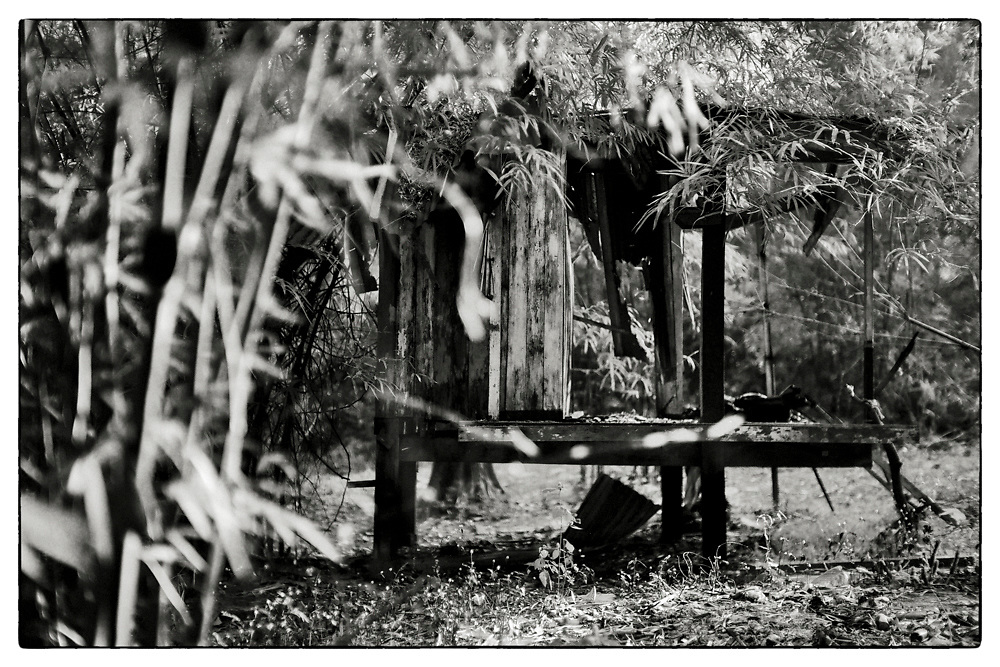 "An exterior view of an abandoned Monk's meditation hut set within a dense bamboo forest, in the grounds of the Pha Koeng Buddhist temple, Chaiyaphum Province, Northeast Thailand, 2017. From the series: ""Pha Koeng"" (2013-2017). (2011-2017)."