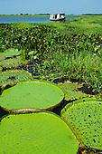 Aquatic biomes: mangrove, floating, floodplain, igapo, swamp