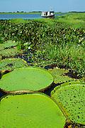 aquatic vegatation