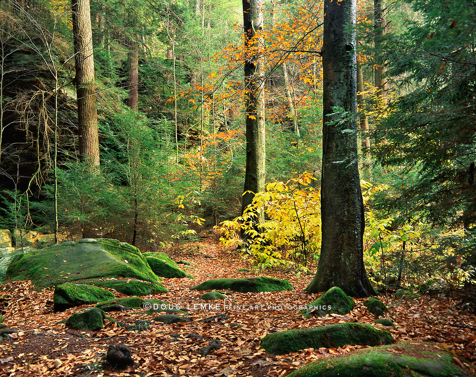 A Pastoral Forest Trail In Autumn At Ash Cave In The Hocking Hills Region Of Central Ohio, USA