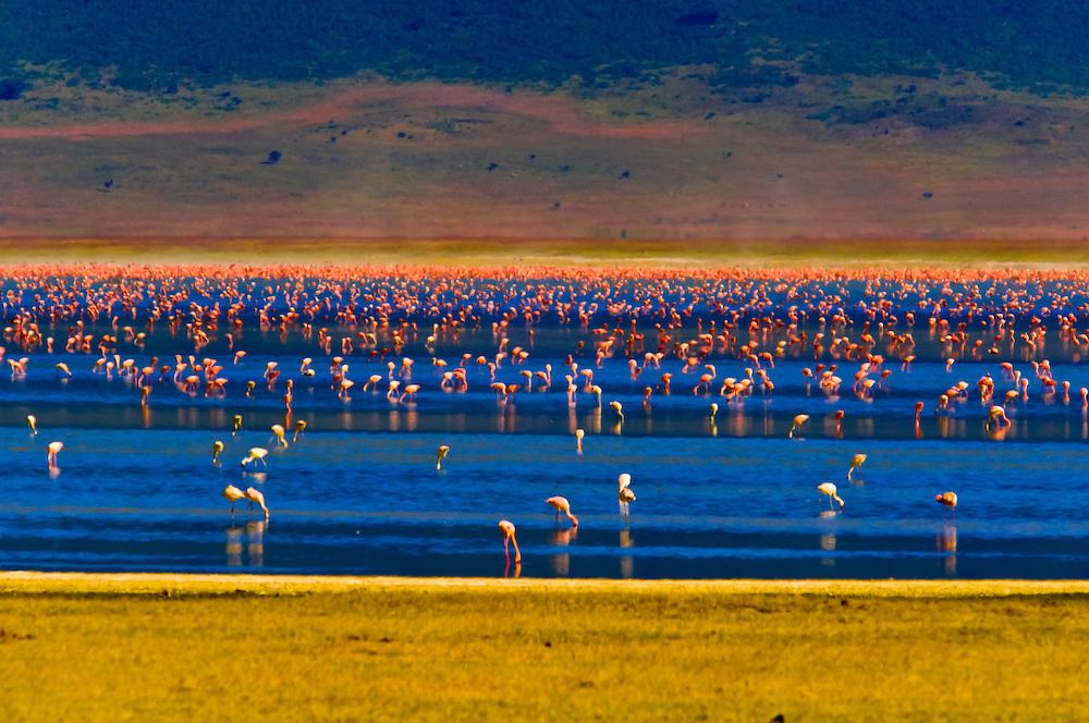 Flamingos on Lake Magadi, Ngorongoro Crater, Ngorongoro Conservation Area, Tanzania