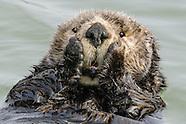 Alaska Marine Mammals