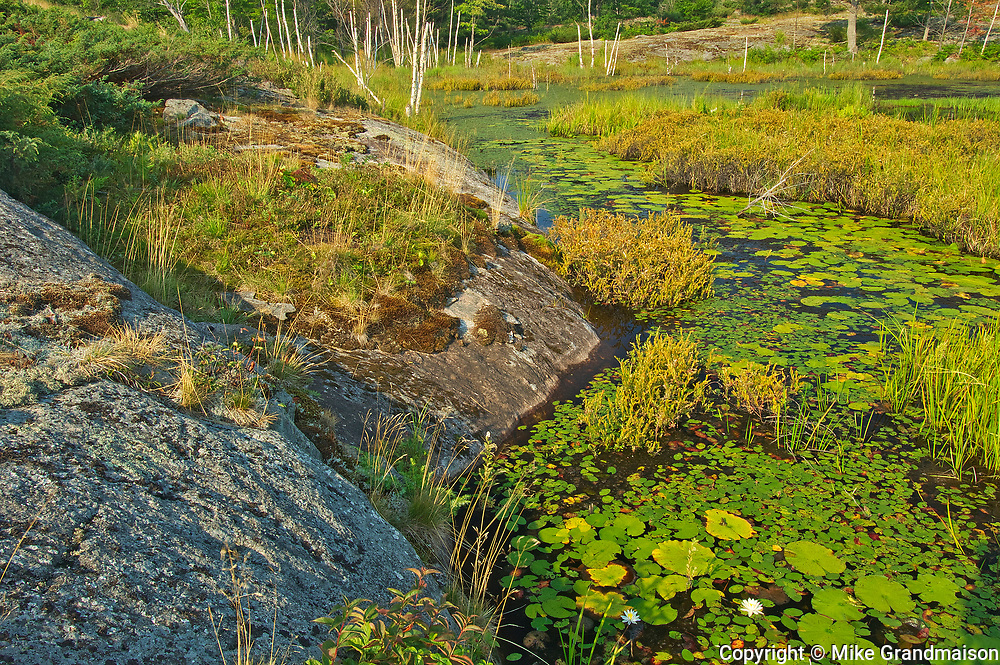 Wetland at Highland Pond<br /> Torrance Barrens Dark-Sky Preserve<br />Ontario<br />Canada