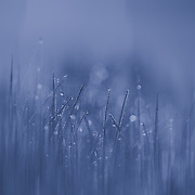 &quot;Blue Streak&quot;<br /> <br /> Soft and subtle shades of blue in a lovely nature abstract!