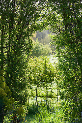 View through opening in hawthorn hedge towards countryside beyond