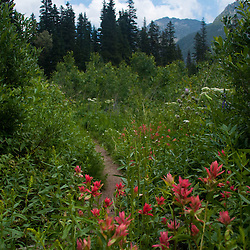 Red Paintbrush, Alpine Lakes Wilderness, Mt. Baker-Snoqualmie National Forest, Washington, US