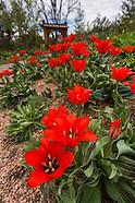 20160423 Plantasia Garden in Spring