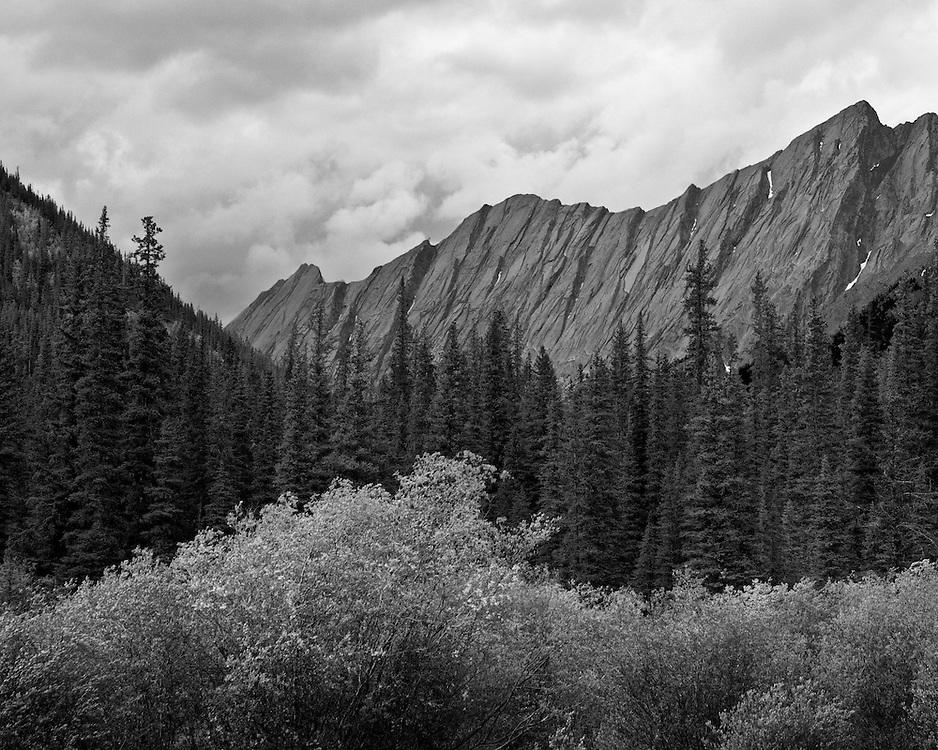 4565 BF - Jasper National Park, Alberta