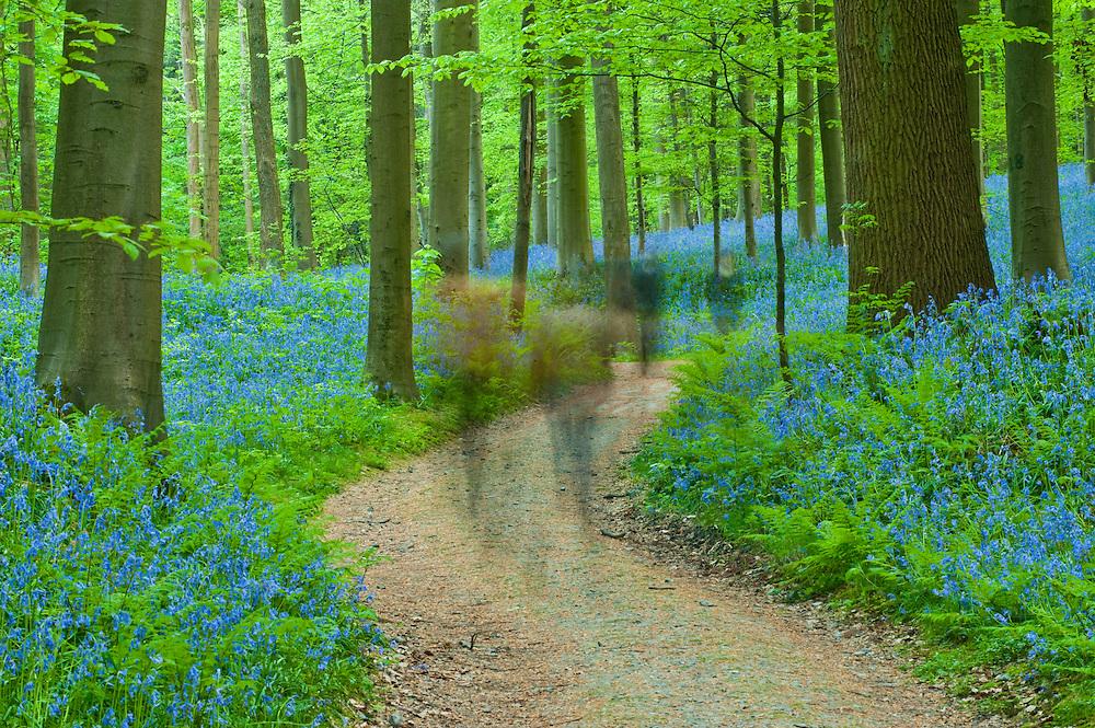 People visiting Hallerbos forest, Belgium