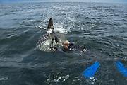 Southern ocean sunfish<br /> Punta Vicente Roca, Isabela Island<br /> Galapagos<br /> Pacific Ocean<br /> Ecuador, South America