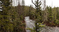 19 MAY 2015: Sheep Creek, a tributary of the Smith River in Montana, is the proposed site of the Black Butte Mine outside of White Sulfur Springs, MT.