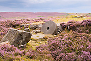 Derbyshire, UK: 24 Aug 2014: Abandoned millstone surrounded by pink heather in flower, on 24 Aug at Hathersage Moor, Peak District