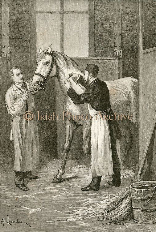 '(Pierre Paul) Emile Roux (1853-1933) at the Instut Pasteur, Paris, removing serum from a horse during his experiments to find a vaccine for Diptheria. Engraving, Paris, 1895.'