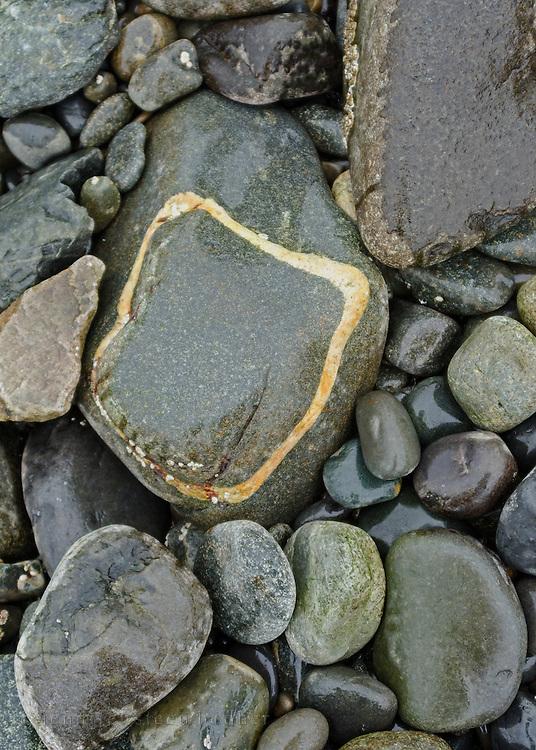 Rain polishes a large schist boulder with a ring of quartz, Bar Harbor, Maine