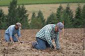 toil planting 6-9-16