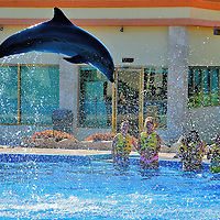 Airborne Dolphin During Encounter at Riviera Maya, Mexico <br />
