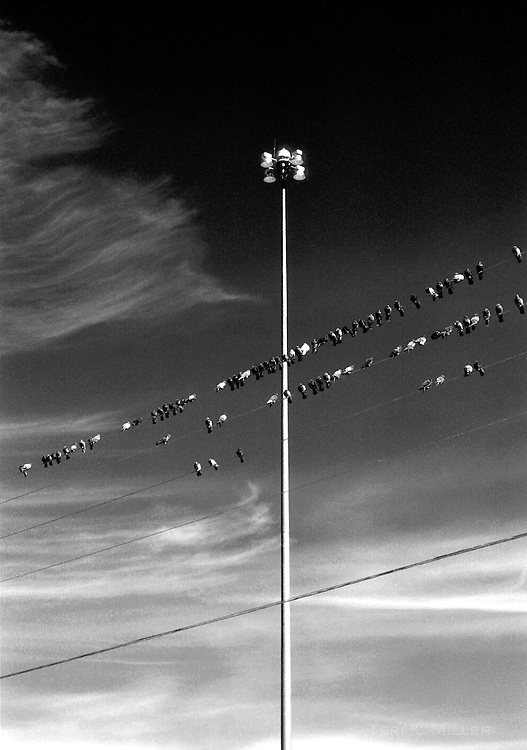 Birds on a wire, Santa Fe, New Mexico