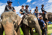 "28 AUGUST 2013 - HUA HIN, PRACHUAP KHIRI KHAN, THAILAND:  Elephant polo players, their elephants and mahouts gather at the start of a match during the King's Cup Elephant Polo Tournament in Hua Hin, Thailand. The tournament's primary sponsor in Anantara Resorts and the tournament is hosted by Anantara Hua Hin. This is the 12th year for the King's Cup Elephant Polo Tournament. The sport of elephant polo started in Nepal in 1982. Proceeds from the King's Cup tournament goes to help rehabilitate elephants rescued from abuse. Each team has three players and three elephants. Matches take place on a pitch (field) 80 meters by 48 meters using standard polo balls. The game is divided into two 7 minute ""chukkas"" or halves. There are 16 teams in this year's tournament, including one team of transgendered ""ladyboys.""    PHOTO BY JACK KURTZ"