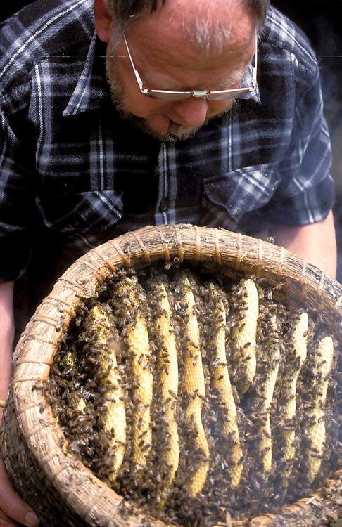honeybee, honingbij