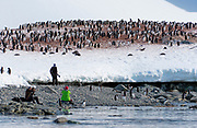 Tourists photographing a colony of Gentoo Penguins at Cuverville Island, the Antarctic Peninsula.