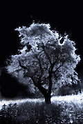 Solarized tree against black sky in field