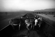 Zouarete, Mauritania - 24 January, 2016:<br /> Donkeys on the wagons full of iron mineral with final destination the city of Nouadhibou.
