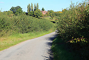 Winding narrow country lane in valley between hedgerows, Monewden, Suffolk, England, UK